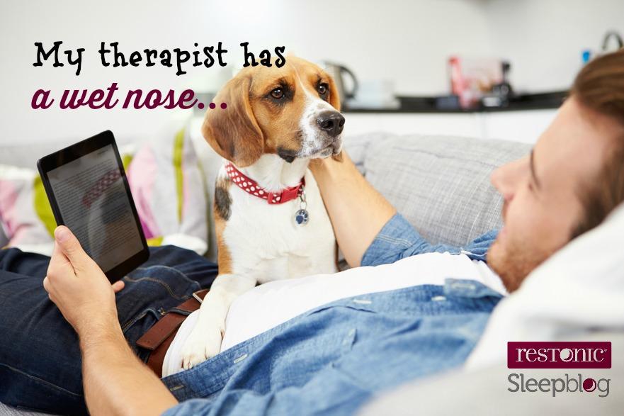 pets & mattress protection