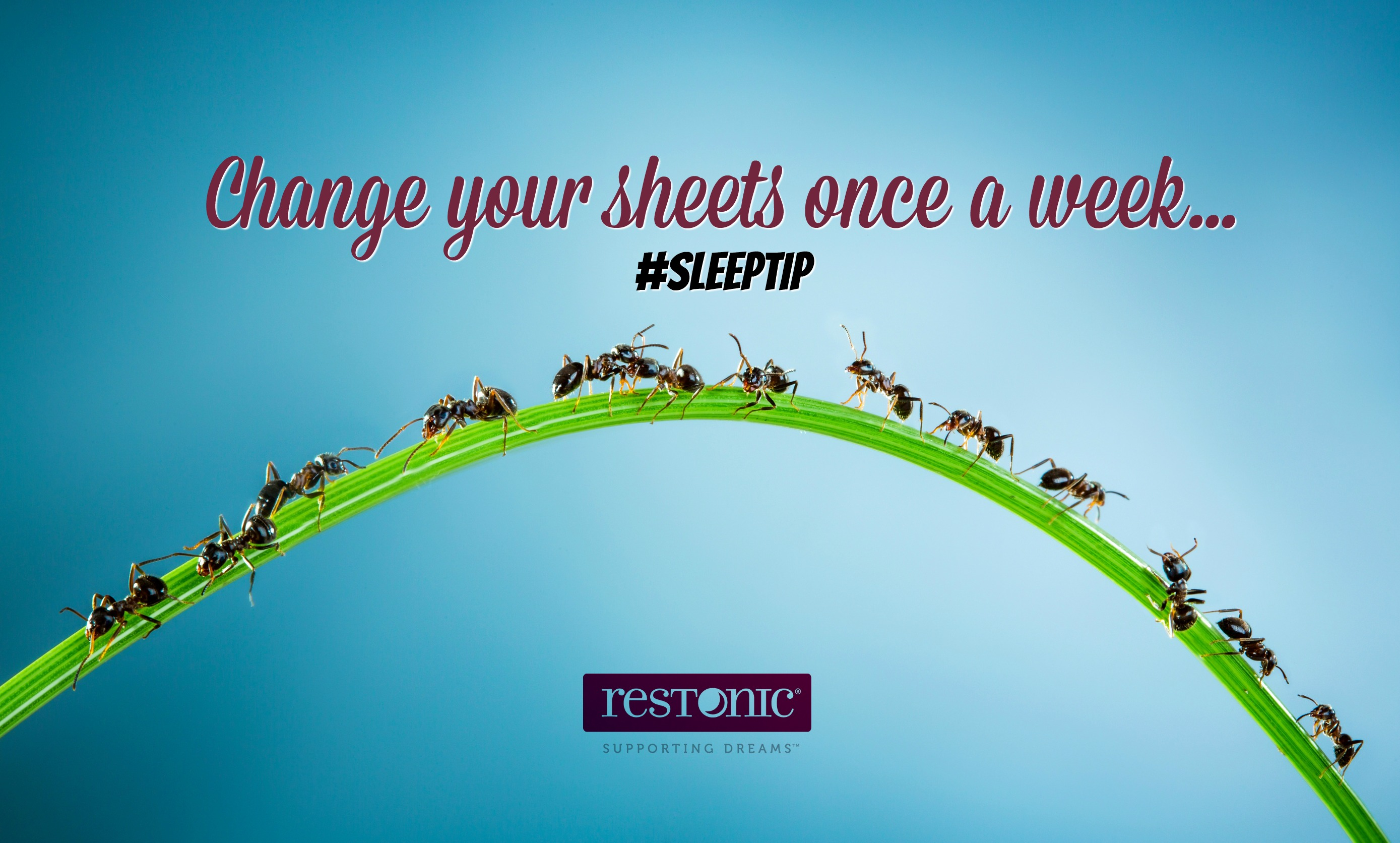 change your sheets weekly
