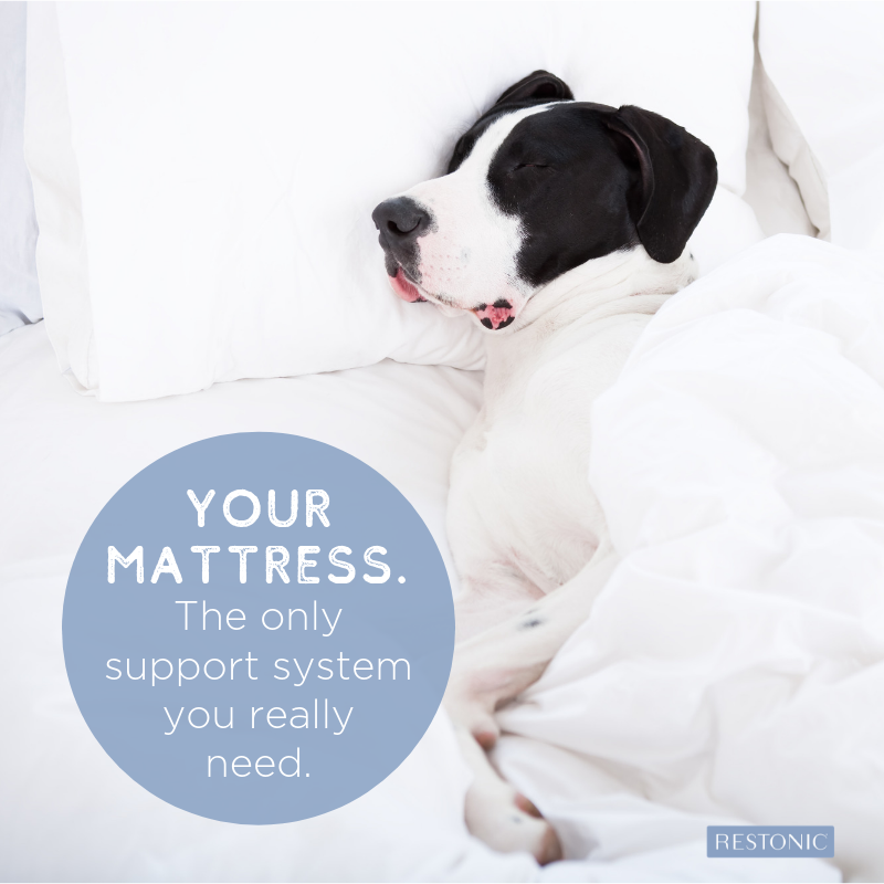 The Ultimate Guide to What's Inside Your Mattress