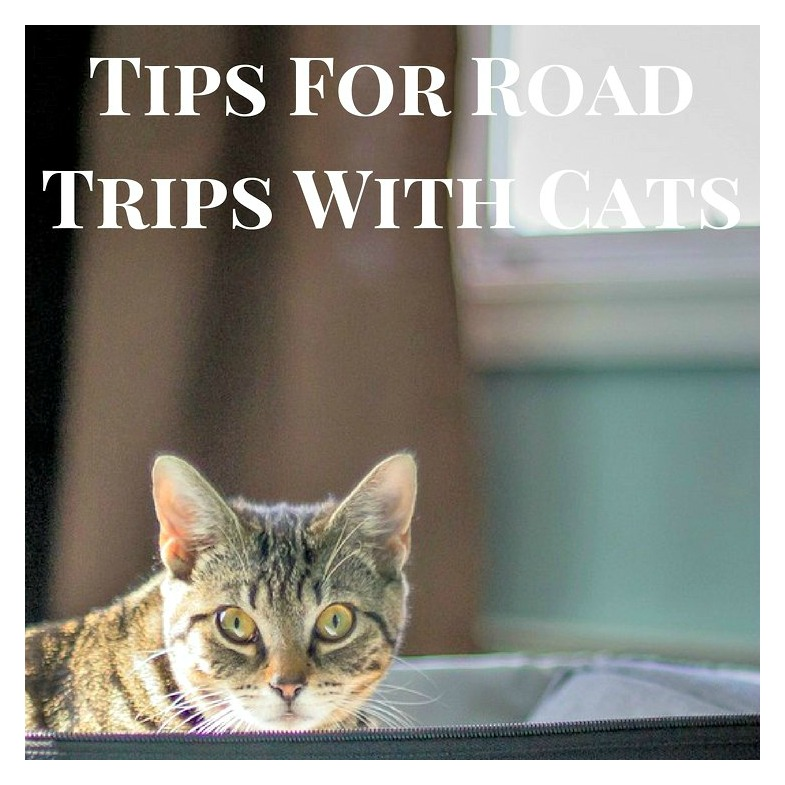 tips for taking a road trip with your cat