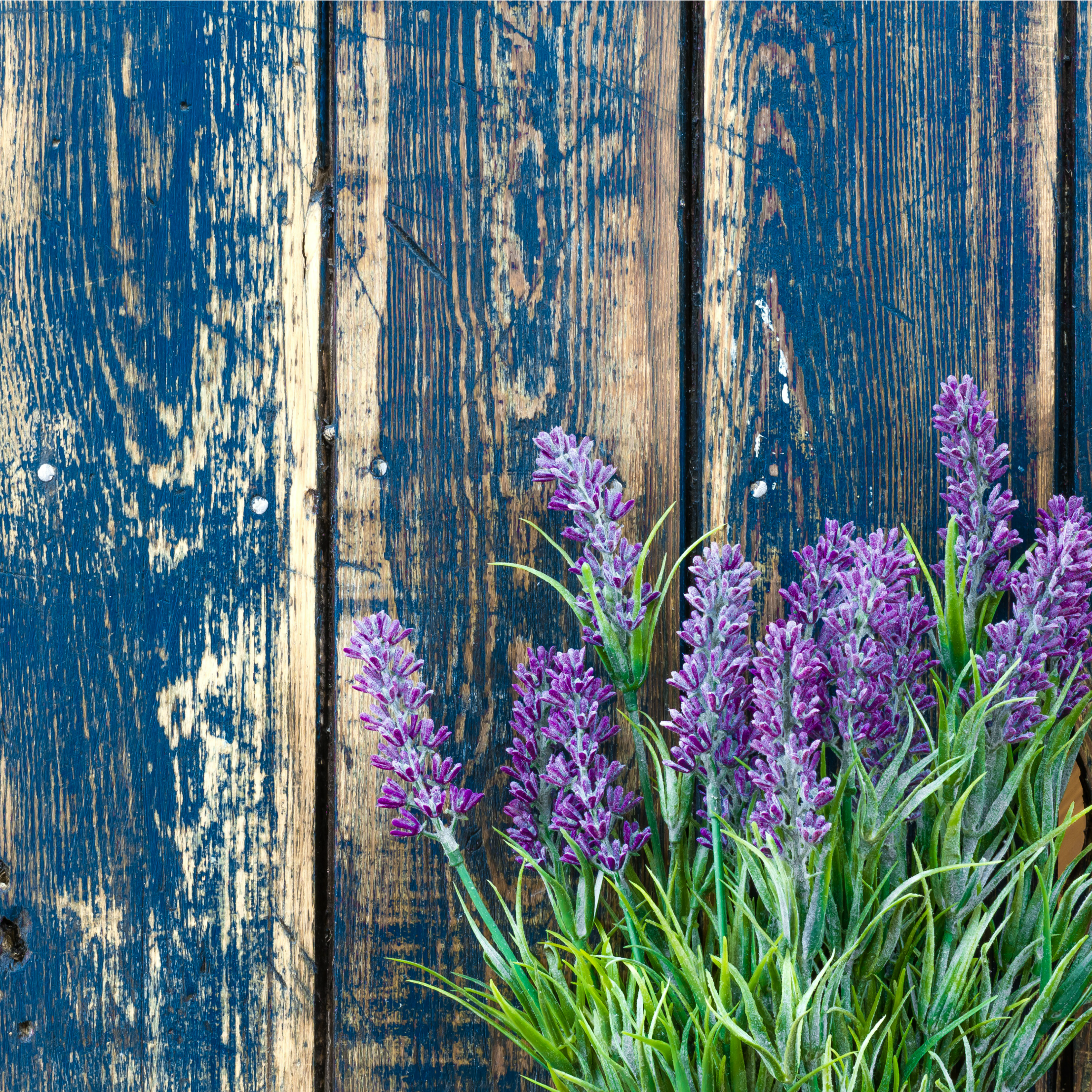 Can Lavender Really Help You Sleep Better Restonic