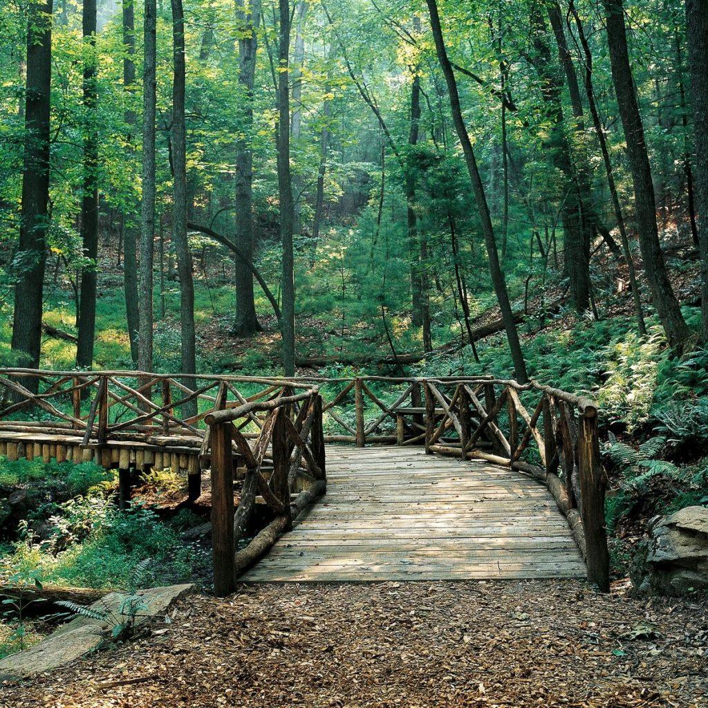 Biltmore Woodland Walk