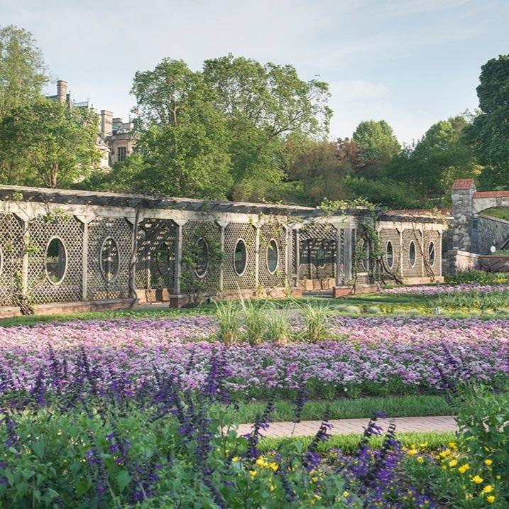Biltmore Lavender Garden