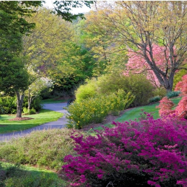 Biltmore Garden Blooms