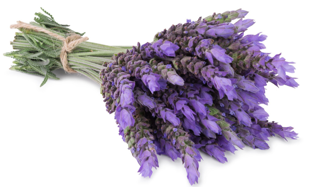 Can Lavender Really Help You Sleep Better?