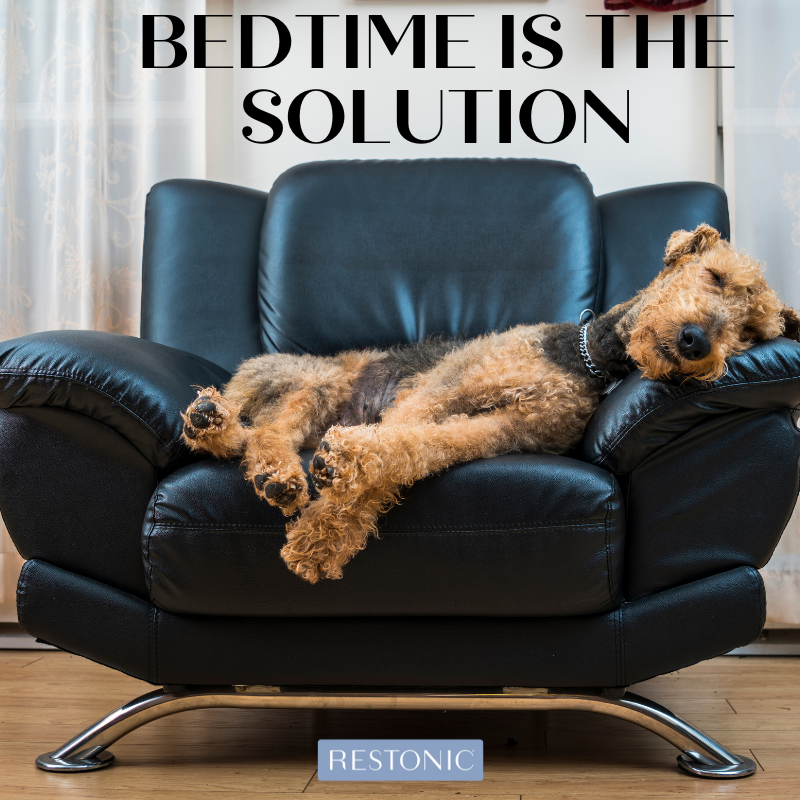 Revenge Bedtime Procrastination