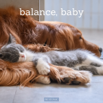 Does sleeping with your dog or cat affect how well you sleep at night?