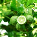 What's are the Health Benefits of Bergamot Oil?