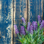 Lavender can help you sleep better at night