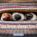 Is Sharing A Bed With Your Pets Putting A Paws On Good Sleep?