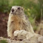 Groundhog day- can an earlier spring mean better sleep for us?
